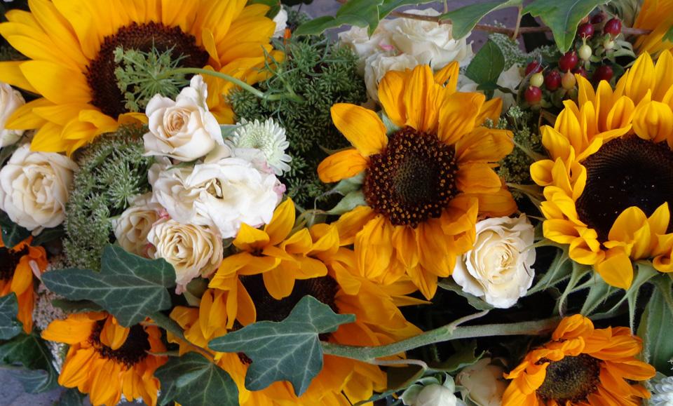 Sonnenblumen_960