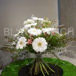 Gerbera - Blume der Freundschaft