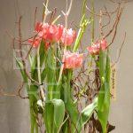 Tulpen ins Geäst gestellt