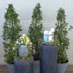Dekoration mit Lorbeerbäumen und Säulen